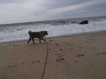 浜散歩11