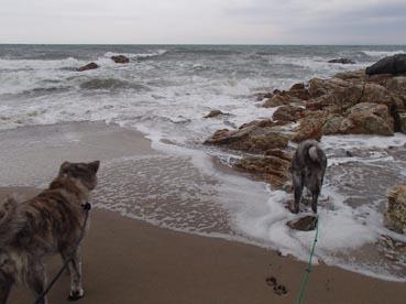 浜散歩12