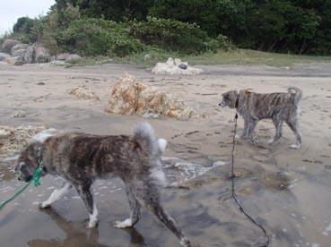 浜散歩15