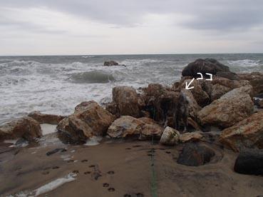 浜散歩16