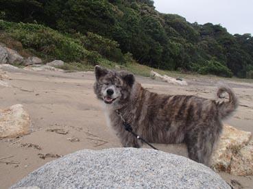 浜散歩18