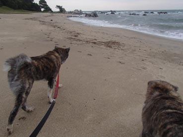 浜散歩25