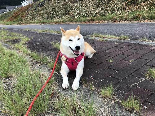 【動画】散歩中のマッサージ