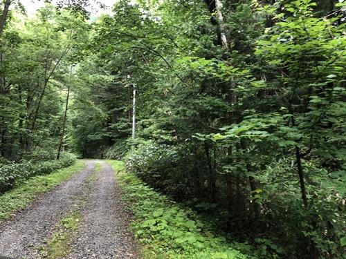 森きちオートキャンプ場2
