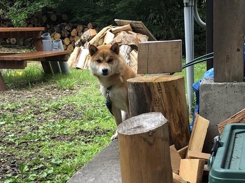 森きちオートキャンプ場4