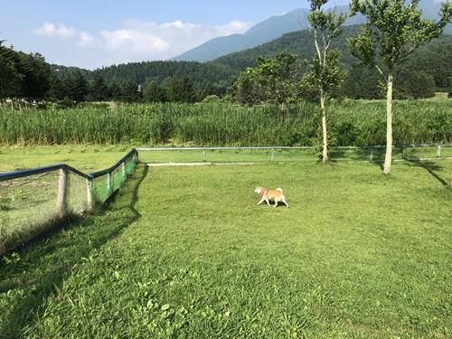 霊仙寺湖ドッグラン11