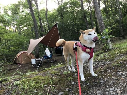キャンプ3日目1