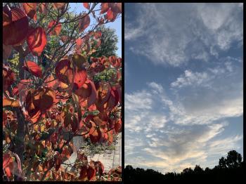 Collage_Fotor1104lplpoi_convert_20191104081545.jpg
