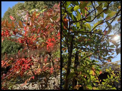 Collage_Fotor1217sasyy_convert_20191217101247.jpg