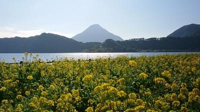 191228開聞岳(菜の花)