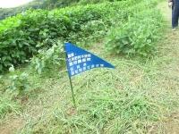 池田農園20190821 (1)