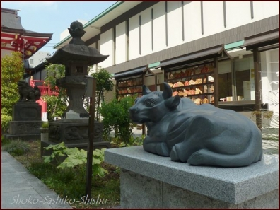 20190712 茅の輪まで 8  成子天神社