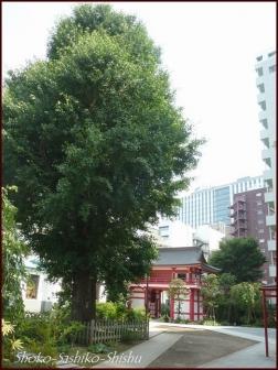 20190712 富士塚 1  成子天神社
