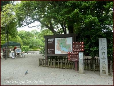 20190731 水前寺公園まで 5  熊本