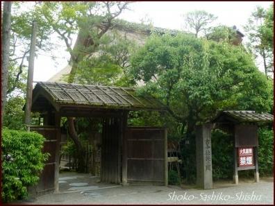 20190731 水前寺公園まで 6  熊本
