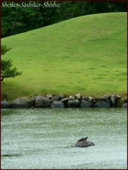 20190731 水前寺公園まで 11  熊本