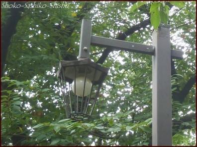 20190824 街灯 3  神田川と街灯