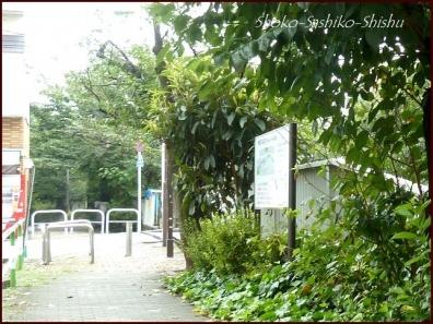 20190824 街灯 4  神田川と街灯