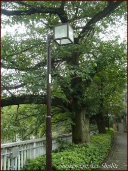20190824 街灯 6  神田川と街灯