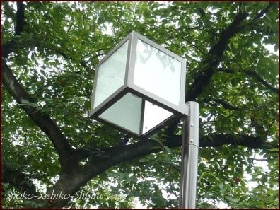 20190824 街灯 7  神田川と街灯