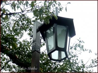 20190824 街灯 12  神田川と街灯