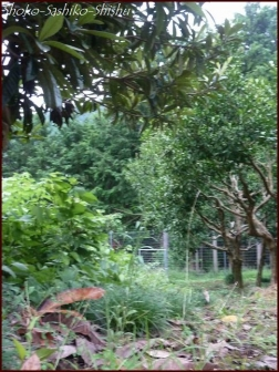 20191013 自然 3  山梨のアトリエ