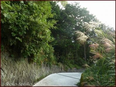 20191013 自然 12  山梨のアトリエ
