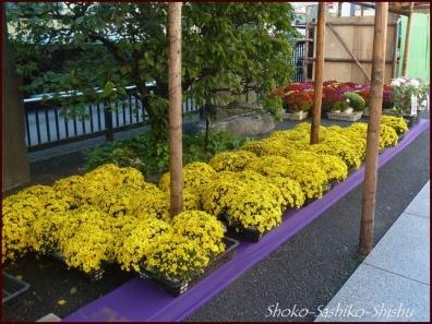 20191114 菊祭り 3  巣鴨