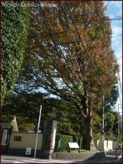 20191127 池まで 1  細川庭園