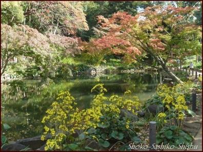 20191127 池を一周 1  細川庭園