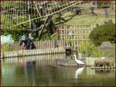20191127 池を一周 3  細川庭園