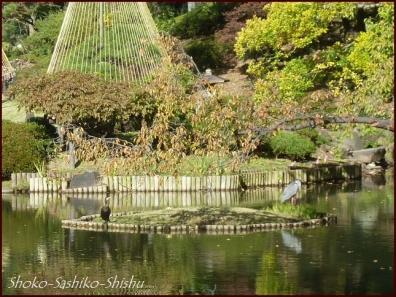 20191127 池を一周 4  細川庭園