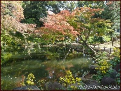 20191127 池を一周 5  細川庭園
