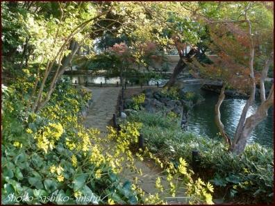 20191127 池を一周 9  細川庭園
