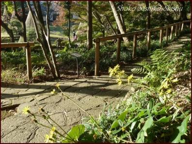 20191127 池を一周 10  細川庭園
