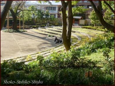 20191127 池を一周 13  細川庭園