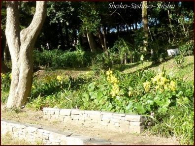 20191127 池を一周 14  細川庭園