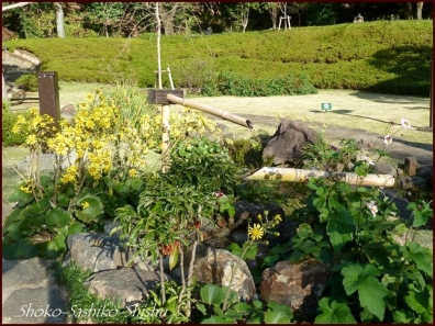 20191127 池を一周 15  細川庭園