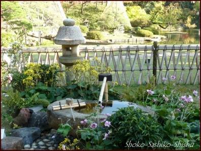 20191127 池を一周 17  細川庭園
