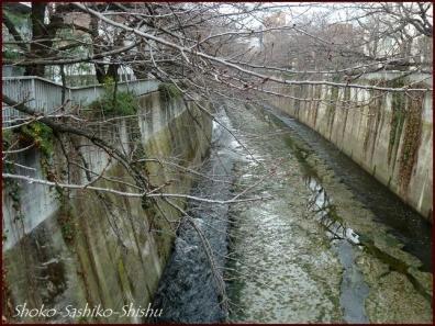 20191225 神田川 1  初冬から