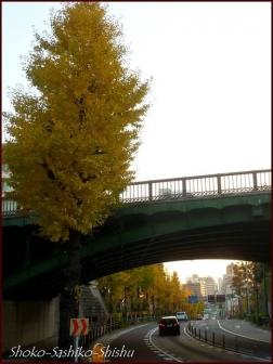 20191225 千歳橋 1  初冬から