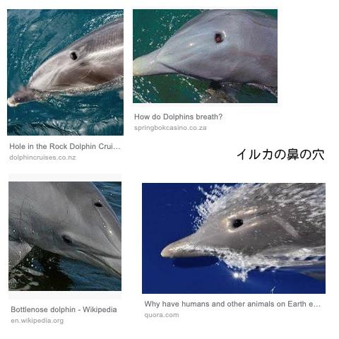 イルカの鼻の穴
