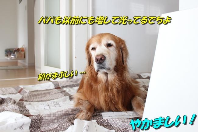 うさぎぬいぐるみ鯛 036