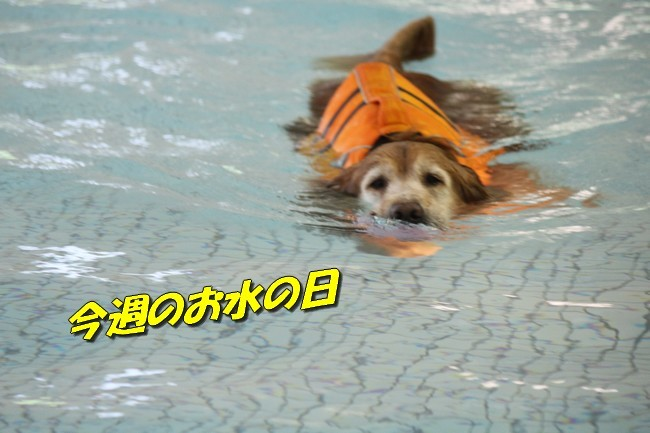 0724りんちゃんマックスくんお水の日 001