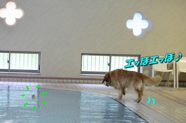 0724りんちゃんマックスくんお水の日 026