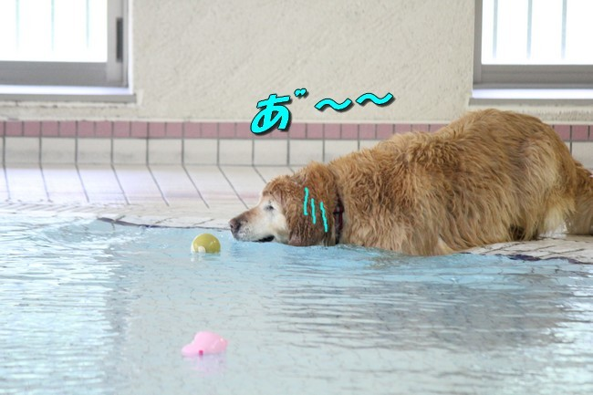 0724りんちゃんマックスくんお水の日 030