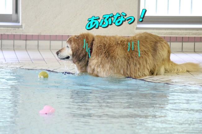 0724りんちゃんマックスくんお水の日 031
