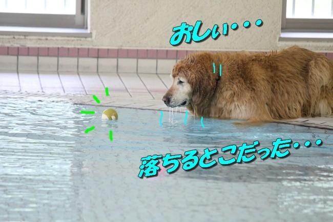0724りんちゃんマックスくんお水の日 032