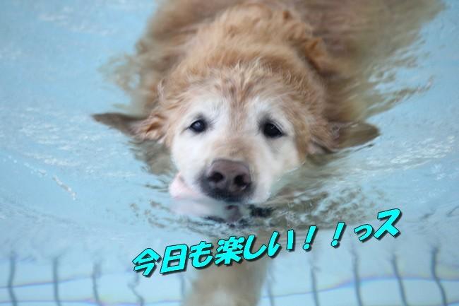 0724りんちゃんマックスくんお水の日 050