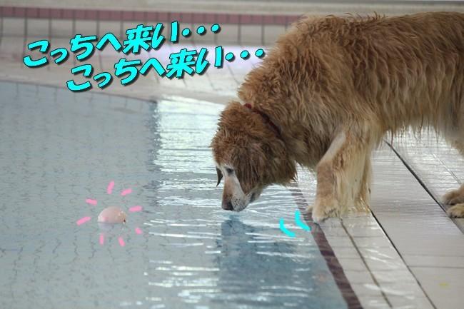 0724りんちゃんマックスくんお水の日 072